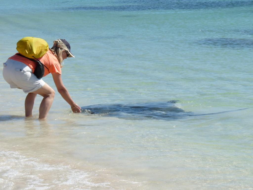 The Stingrays of Hamelin Bay