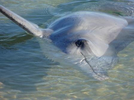 Dolphin by Jo Castro