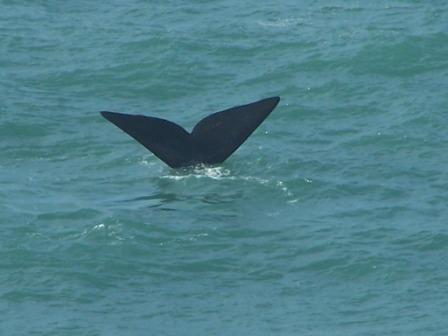 Whales & Dolphins in Bunbury