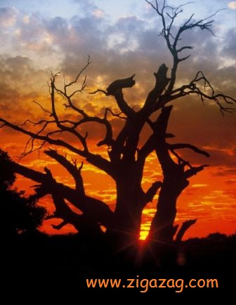 African Sunset by David Castro