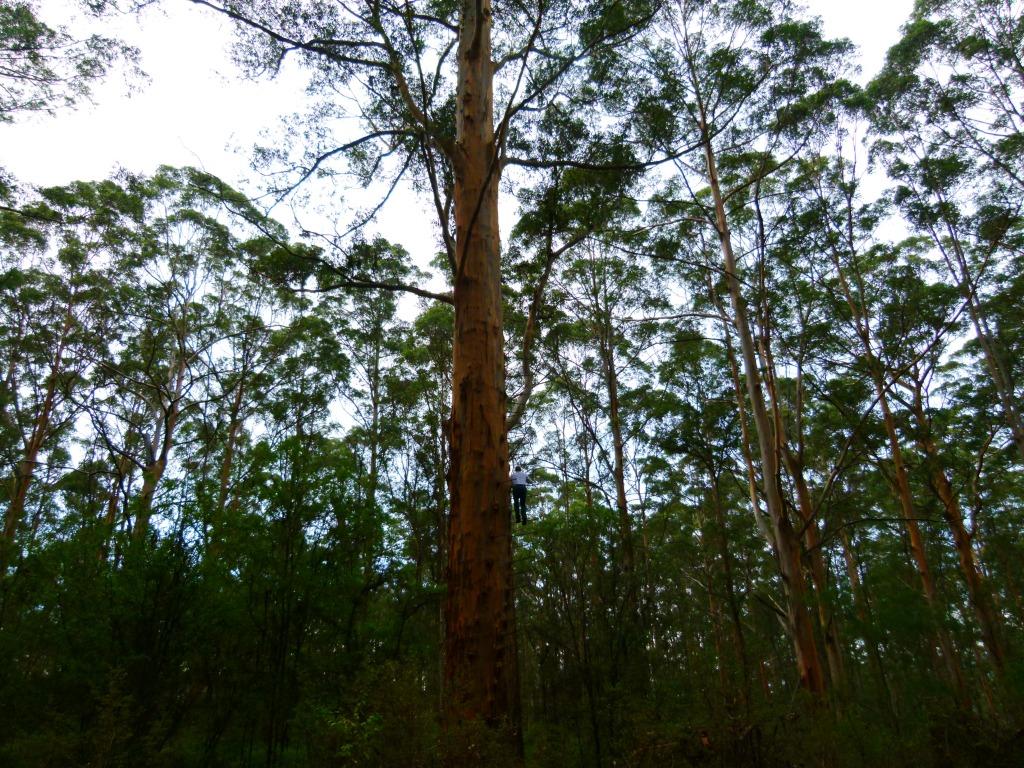 Climb a tree in Pemberton, www.zigazag.com