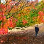 Balingup autumn colours, www.zigazag.com by Dave Castro