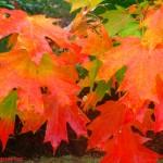 Autumn Colours, Balingup, Western Australia, by Johanna Castro