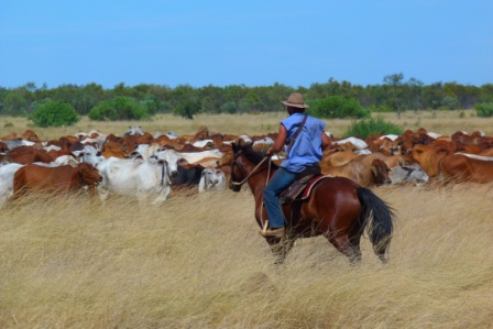 Kimberley, north western australia by Jo CAstro