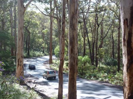 Boranup Forest, Western Australia by Jo Castro