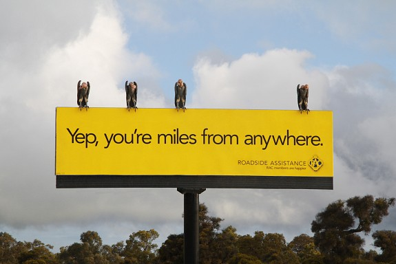 Vulture billboard