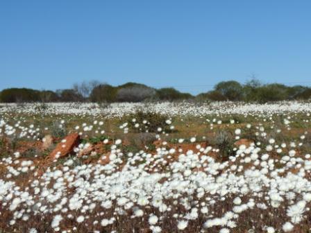 Wild Flowers by Jo Castro