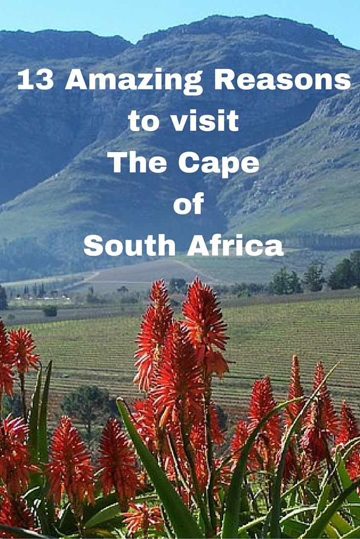 13 Amazing Reasons to Visit the Cape of South Africa