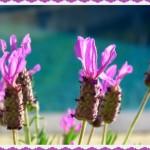 West Australia, flowers, by Jo Castro