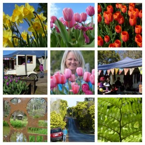 Fabulous festivals in South West Australia, Nannup Flower Festival by Jo Castro