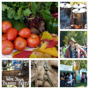 Fabulous festivals in South West Australia, Balingup Small Farm Field Day by Jo Castro