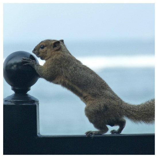Squirrel in Bali by Dave Castro