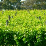 Wineries of the Geographe Wine Region
