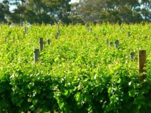 Wineries of the Geographe Wine Region