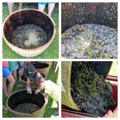 Geographe Bay Wineries
