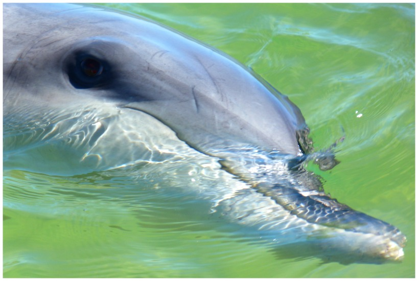 Dolphin Discovery Centre and why a dolphin encounter can be life changing.
