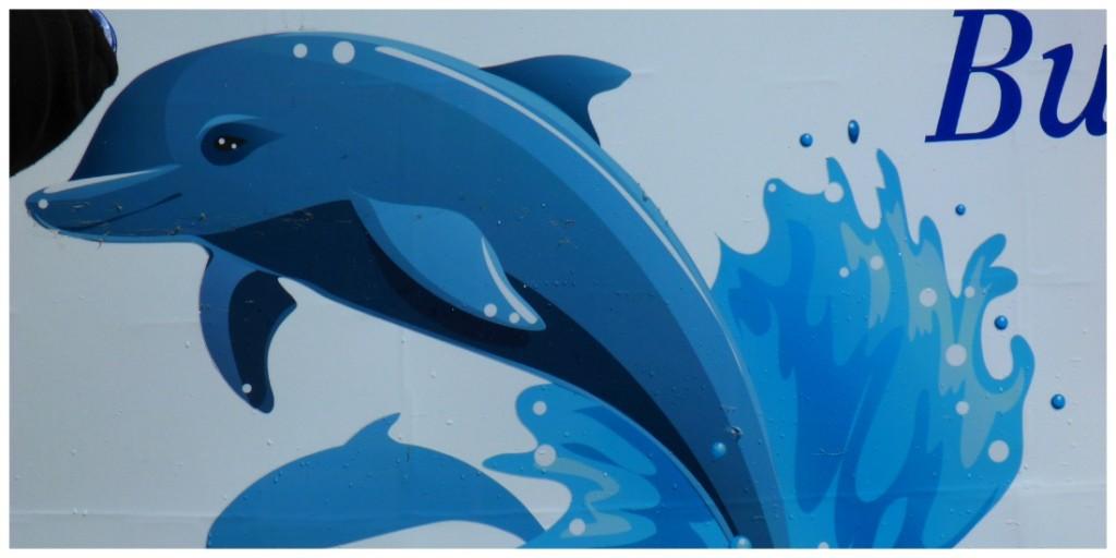 Dolphin Discovery Centre, Dolphin by Jo Castro at ZigaZag
