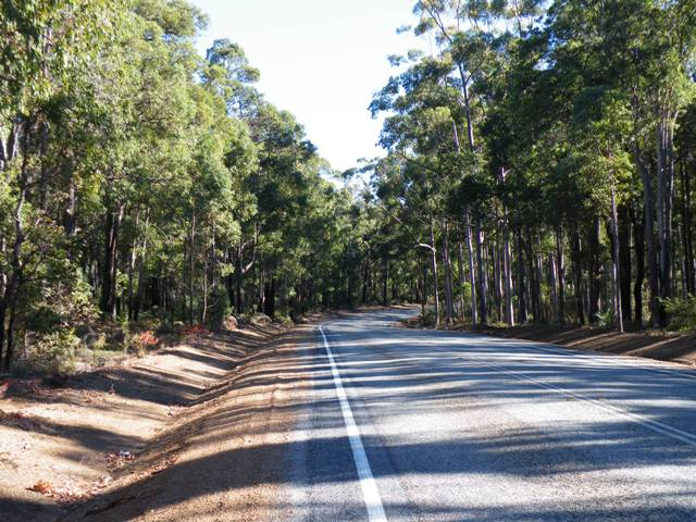 Things to do in Perth, travelling from the forests of the south by Jo Castro