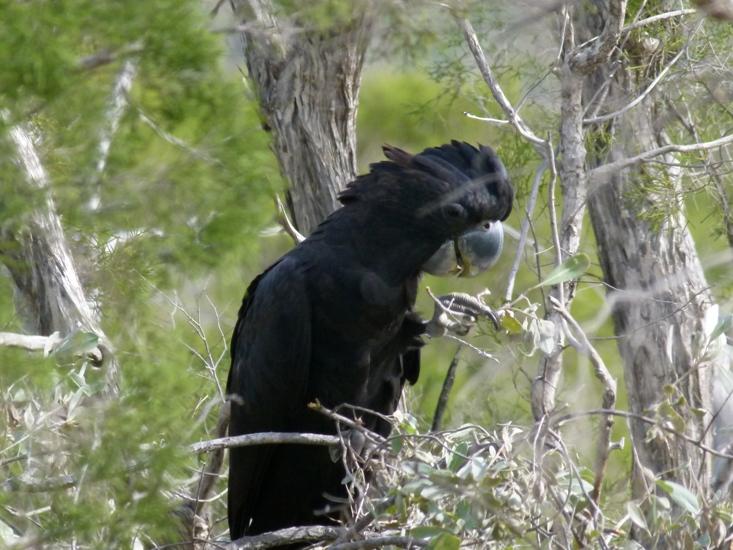 Australian outback, the kimberley by jo castro