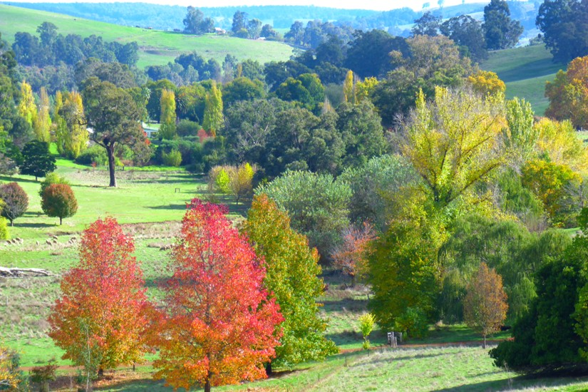 10 things to love about Autumn, Balingup by Jo Castro