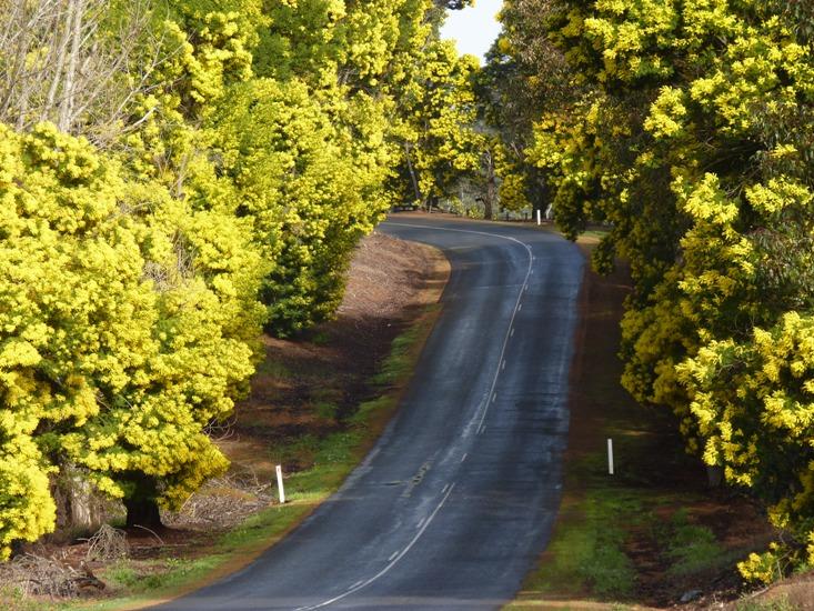 Where To Go To See Wildflowers In Western Australia Zigazag