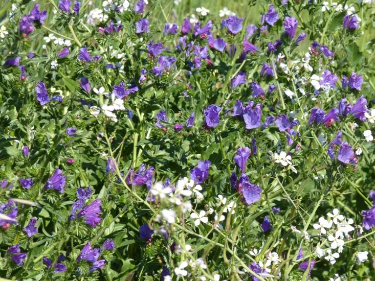 Western Australian Wildflowers by Jo Castro