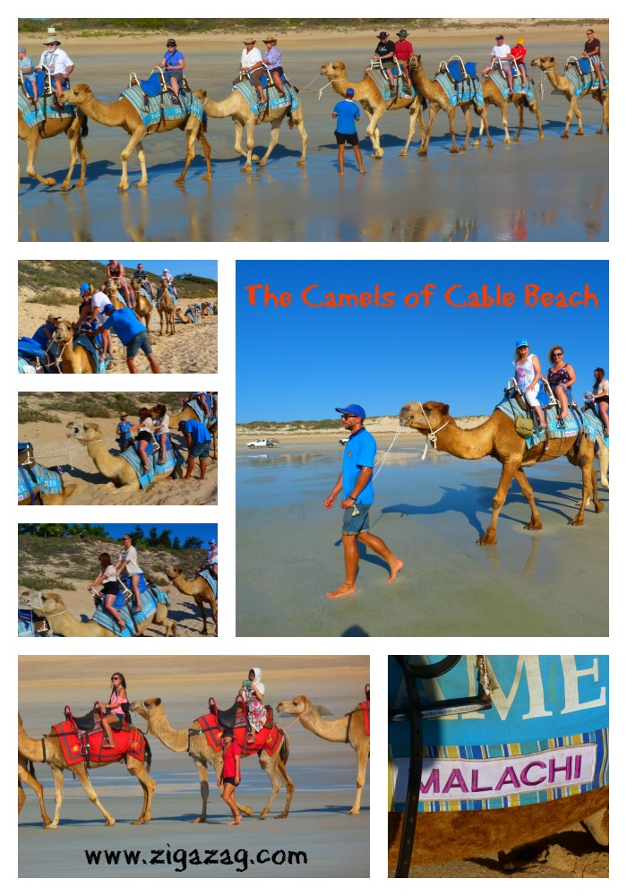 The camels of Cable Beach