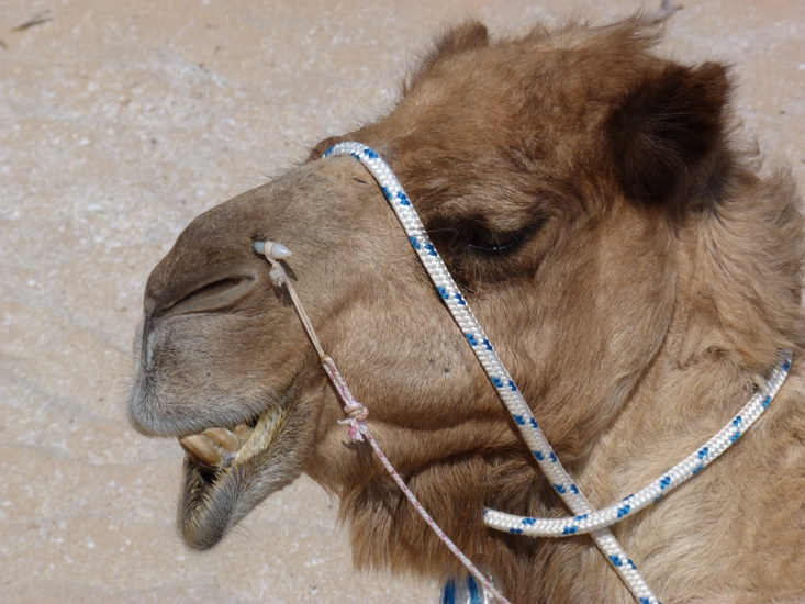 camels-cable-beach-jo-castro