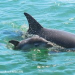 facts-about-dolphins