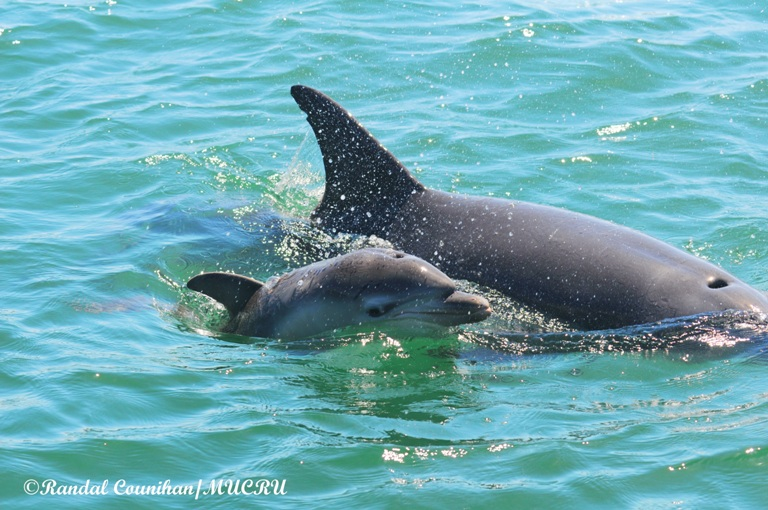 New Baby Dolphin in Bunbury plus some Fast Facts about Dolphins