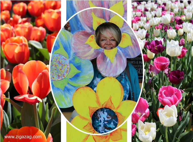 western australia, nannup, where to see tulips