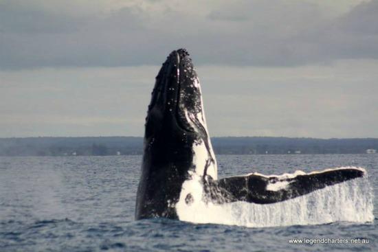 whale watching, doug robertson