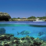 Thrills Rottnest Island