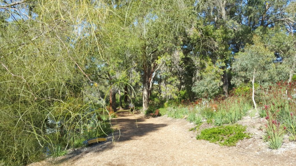 3 Easy Walks in Perth