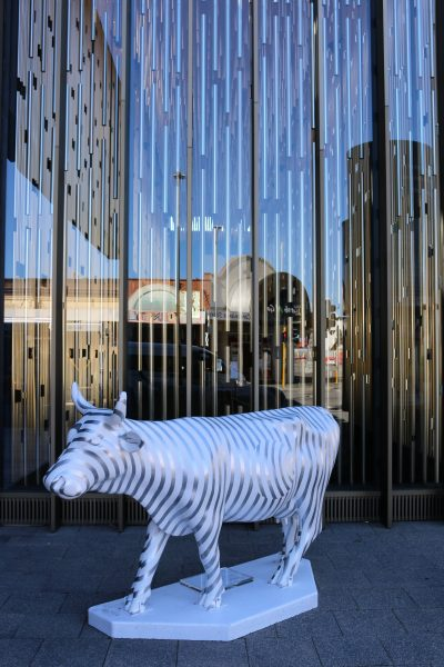 Cow Parade Perth