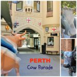 Perth Cow Parade, a festival of cows and art in Perth, Western Australia