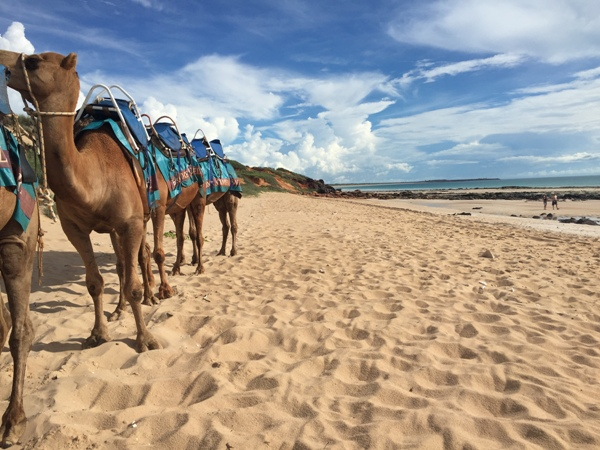 broome, camels, winter in western australia