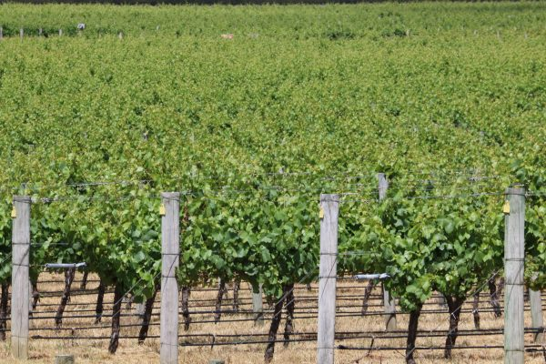 what to do in margaret river, vineyards