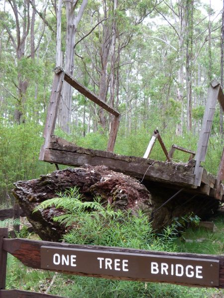 One Tree Bridge, Manjimup