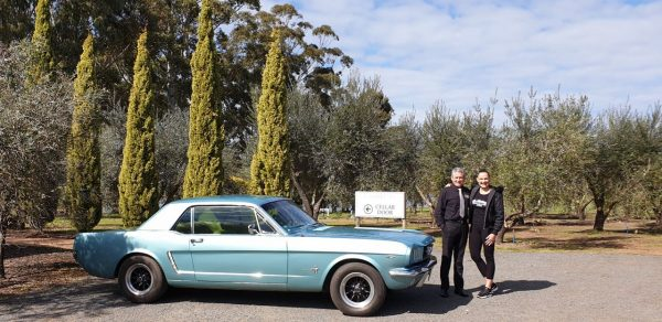 Mr Mustang Hire. Blue mustang 1965 coupe