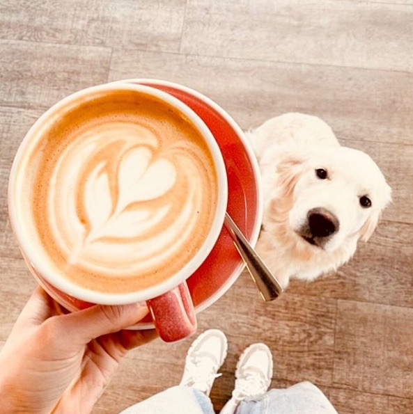 Image: Coffee and dog in blog post: Eco-friendly coffees and cafes in Western Australia.
