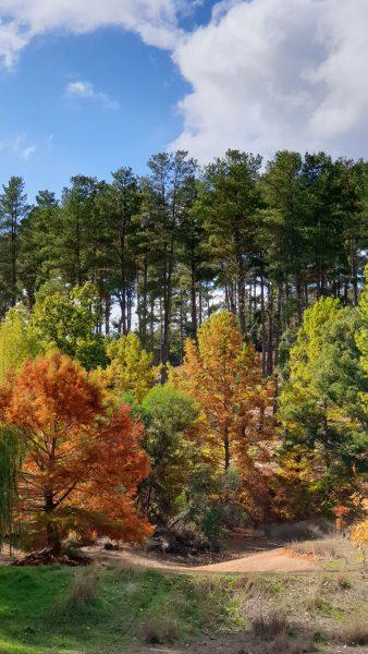Balingup Tree Park