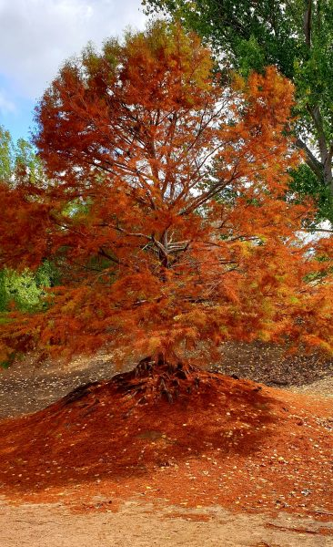 Balingup, Golden Valley Tree Park