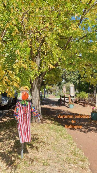 Balingup Autumn Colours